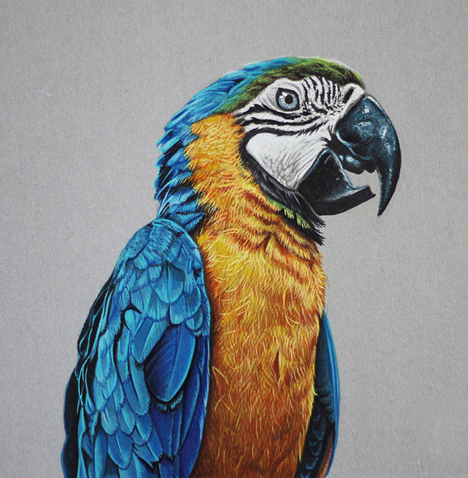 colored pencil bird drawings -  4