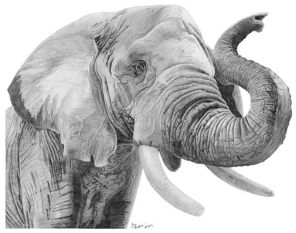 4 elephant animal drawings