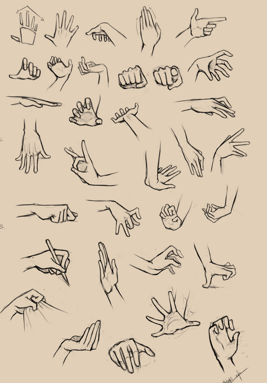 4 hand anatomy drawing