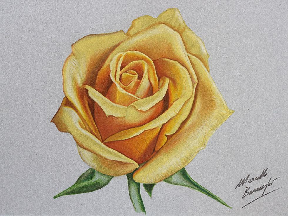 4 rose flower drawings
