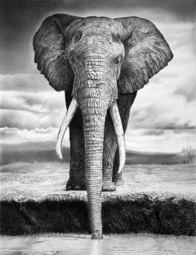 5 elephant animal drawings