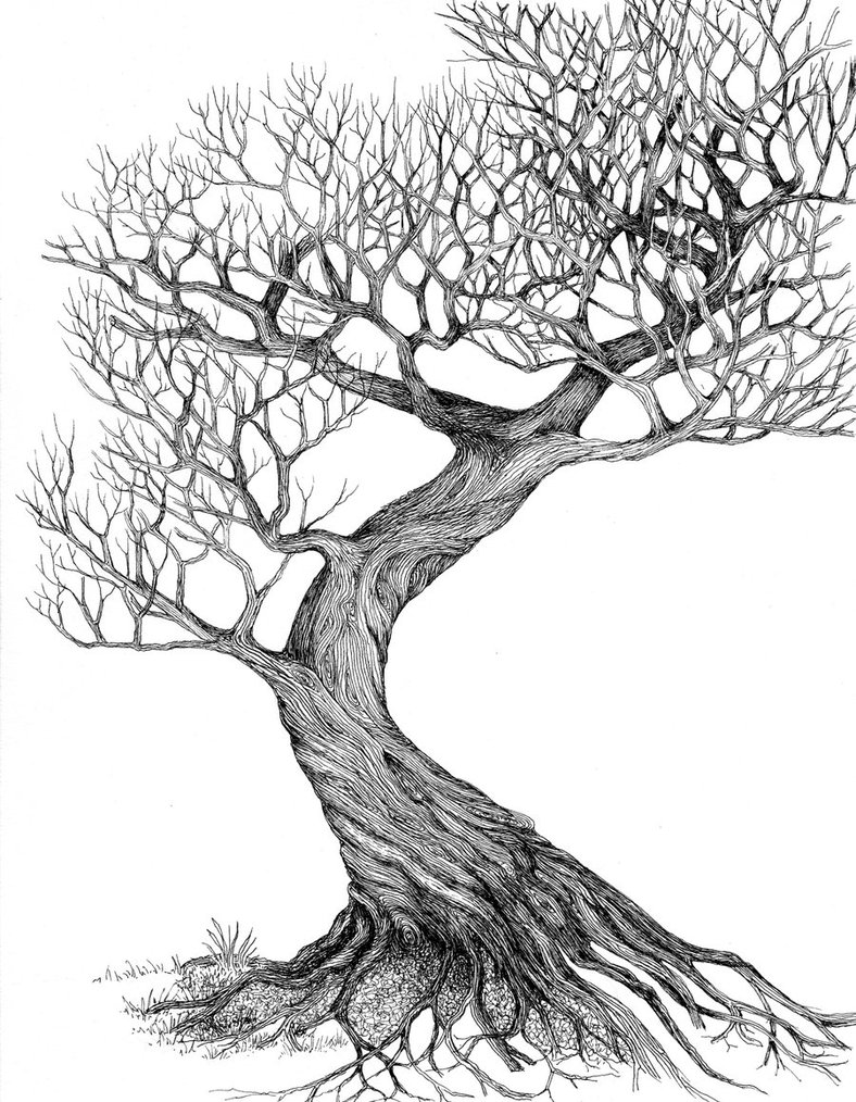 5 tree drawings