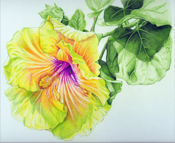 7 flower drawings by stevieraythompson