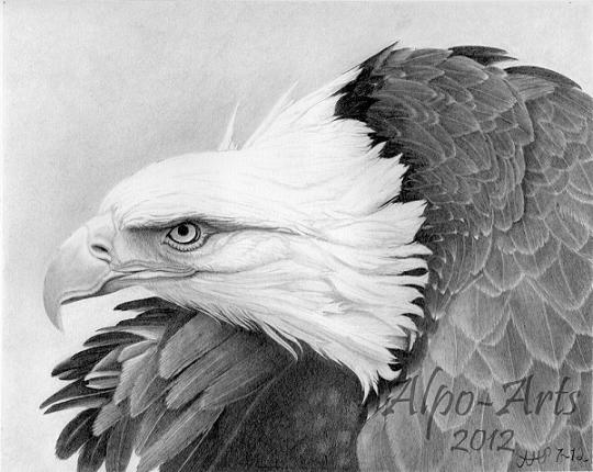 8 eagle pencil bird drawings