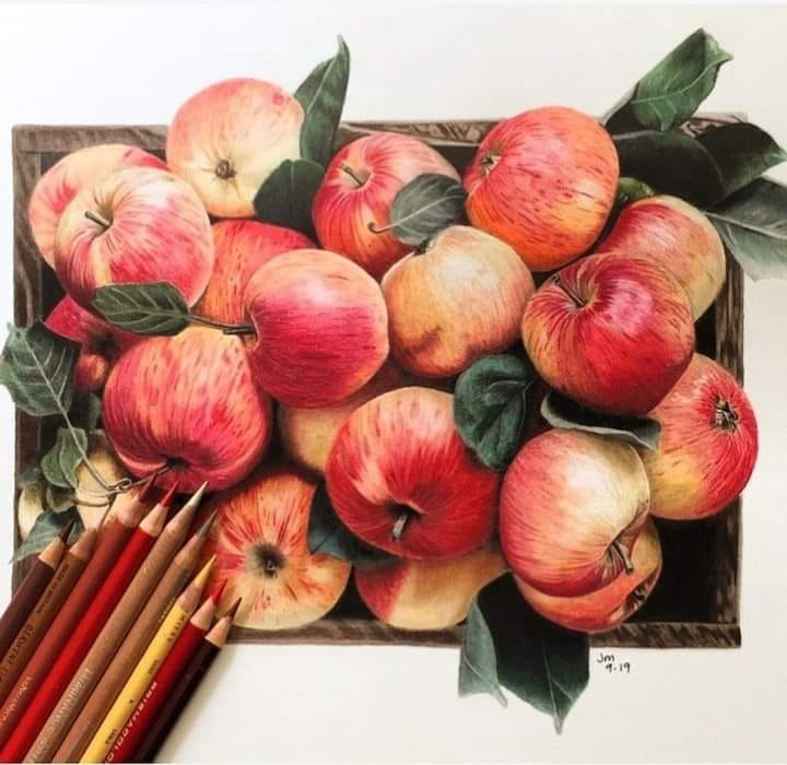 color pencil drawing apple by jennifer morrison