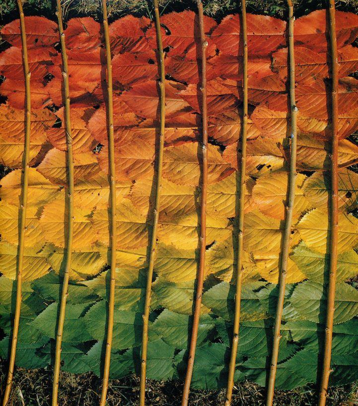 colorful leaf art by nils udo