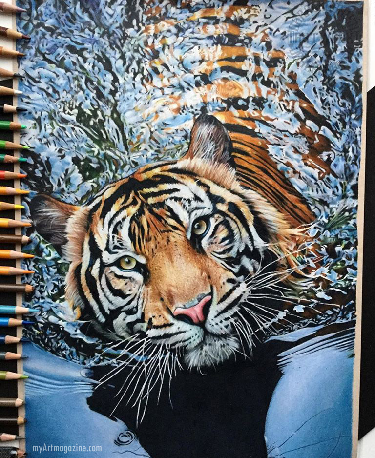 realistic color pencil drawing tiger by daragh obrien