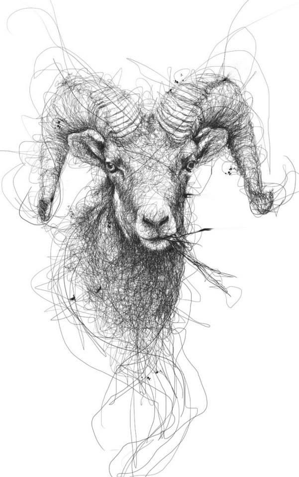 goat scribbles vince