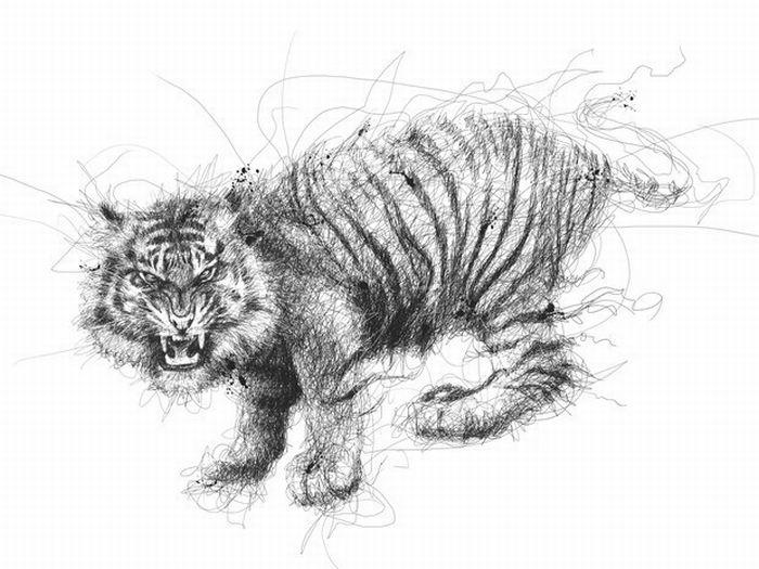 tiger scribbles vince